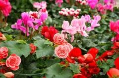 Покупка цветов на праздники: как сэкономить время и деньги?