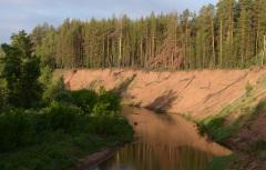 Антипинский НПЗ займется улучшением экологии в Бузулукском бору