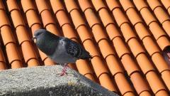 Крыша из металлочерепицы: тандем благородства и надежности