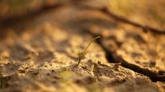Тайны плодородного грунта