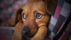 Зачем ходить к ветеринару?