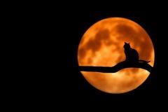 Когда занимать и отдавать деньги по лунному календарю?