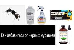 Как быстро уничтожить черных муравьев