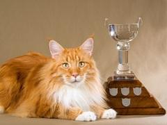 В Лондонском Хрустальном дворце прошла первая в мире выставка кошек