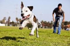 В Москве утверждены правила выгула собак