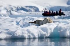 Впервые в мире человек ступил на берег Антарктиды