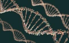 Ученые доказали, что носителем наследственной информации является ДНК