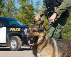 В полицейской операции впервые задействовали собаку