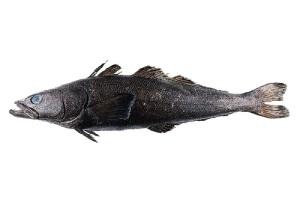 Чудо-рыба помогла сделать удивительное открытие об океане