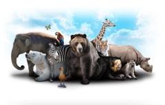 День образования Международного союза охраны природы