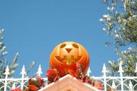 Тыкву, как украшение, можно встретить везде, и даже на крыше