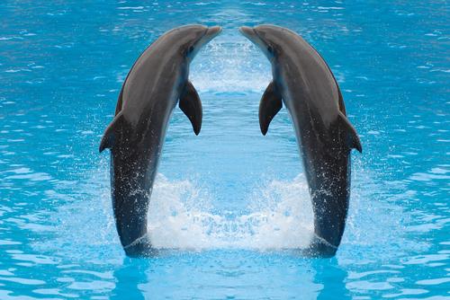 В морях нашей страны обитает несколько десятков видов китов, дельфинов и тюленей