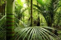 Тропический лес (Фото: STILLFX, Shutterstock)