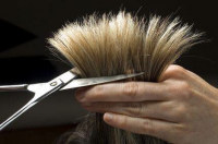 Самое время постричься. Фото: Shutterstock