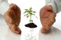 Посадите дерево
