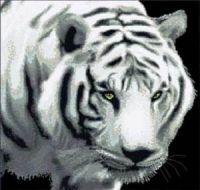 Рядом с хищником надо держать себя предельно внимательно. Фото: radikal.ru