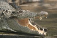 Сегодня даже крокодилы смеются (Фото: Vera Volkova, Shutterstock)
