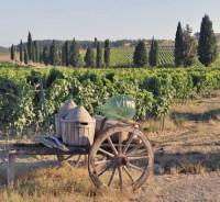 … и виноградниками, где производят всемирно известные вина (Фото: gallimaufry, www.shutterstock.com)