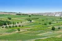 Богатые поля Молдовы (Фото: Serghei Starus, Shutterstock)