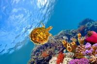 Главное в Хургаде – это море, богатое представителями местной фауны (Фото: Vlad61, www.shutterstock.com)