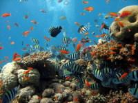 Коралловые рифы – одна из главных достопримечательностей акватории Эйлата (Фото: Elisei Shafer, www.shutterstock.com)
