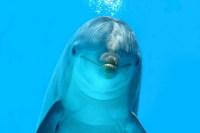 В подводной обсерватории можно наблюдать морских обитателей в естественных условиях (Фото: ShopArtGallery, www.shutterstock.com)