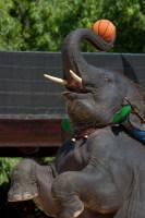 Интересно посетить и Слоновью деревню… (Фото: puwanai, www.shutterstock.com)