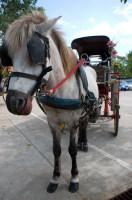 Конные экипажи до сих пор здесь в качестве транспорта (Фото: rattanapatphoto, www.shutterstock.com)