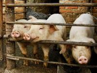 Свинья - копилка: что в нее положишь, то и возьмешь (Фото: Iriana Shiyan, Shutterstock)
