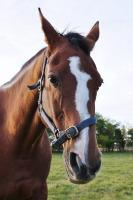 И готовили для водяного лошадь (Фото: 1000 Words, Shutterstock)