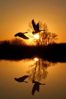 Благодаря деятельности мигрирующих птиц поддерживается баланс экосистемы в целом (Фото: Terrance Emerson, Shutterstock)