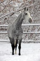 В этот день давали лошадям отдохнуть (Фото: Kondrashov MIkhail Evgenevich, Shutterstock)