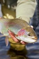 Апостол Петр считается покровителем рыбного промысла (Фото: Korban Schwab, Shutterstock)