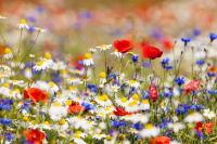 (Фото: courtyardpix, Shutterstock)