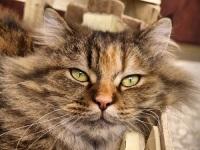Одна из задач Дня бездомных животных — пробудить у владельцев зверей сознательное отношение к своей роли (Фото: bouzou, Shutterstock)
