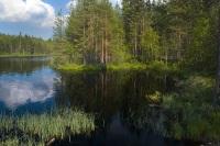 Богатая природа Карелии (Фото: Leshik, Shutterstock)