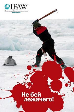 Плакат акции IFAW по спасению гренландского тюленя