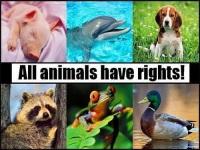 Международный день прав животных объединяет всех неравнодушных