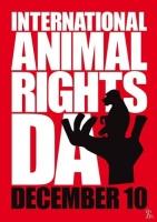 Борцы за права животных отстаивают для братьев наших меньших те же права и свободы, которые имеет человек