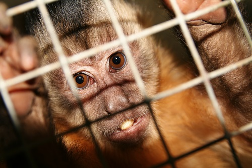 Всемирный день защиты лабораторных животных: смысл и цель этого праздника