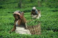 Главное — чтобы они были произведены без применения рабского и детского труда