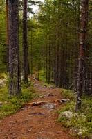 Леса - это «зеленые легкие» нашего родного края (Фото: Andrey Lavrov, Shutterstock)