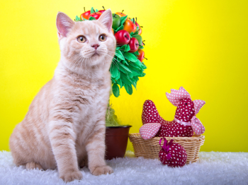 Видео про котиков особенно популярны. (Фото: MishelVerini , Shutterstock.com)