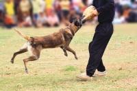 Собаки проходят различные тренировки (Фото: Skynavin, Shutterstock)