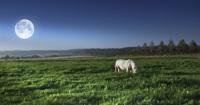 Существовало поверье, что на болотах появляется белый конь... (Фото: Dhoxax, Shutterstock)