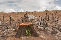 На Земле практически не осталось мест, где бы не ступала нога человека (Фото: PhilipYb, Shutterstock)