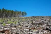 Экономия или переработка тонны бумаги позволяет «спасти» 17 деревьев... (Фото: Ivan_Sabo, Shutterstock)