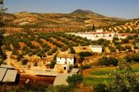 Площадь оливковых садов вокруг города составляет около 400 кв.км (Фото: nito, Shutterstock)