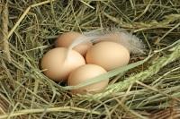 Яйца, которые несли «челобитные куры», считали лечебными (Фото: andia, Shutterstock)