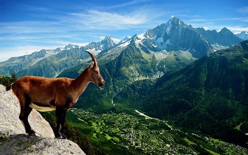 Горы - это заповедник для многих уникальных видов растений и животных (Фото: Jool-yan, Shutterstock)